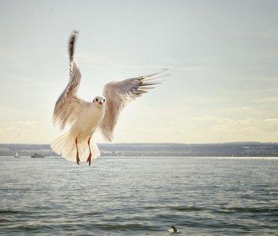 repülőmadaras